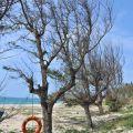-嵵裡沙灘(嵵裡海水浴場)照片