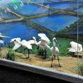 黑面琵鷺保育研究中心 & 黑面琵鷺保護區-黑面琵鷺保育研究中心 & 黑面琵鷺保護區照片