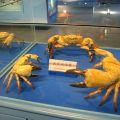 竹灣螃蟹博物館-竹灣螃蟹博物館照片