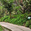 草嶺峭壁步道-草嶺峭壁步道照片