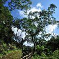 竹坑溪步道(挑炭古道)-竹坑溪步道(挑炭古道)照片
