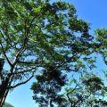 瑞里風景區-瑞里風景區照片