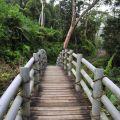 蓬萊瀑布 & 步道-步道上的木橋照片