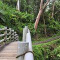 蓬萊瀑布 & 步道-木橋&步道照片