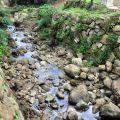 九芎神木(九芎公)-旁邊溪流照片