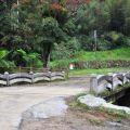 九芎神木(九芎公)-旁邊的道路小橋照片