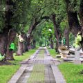 南瀛總爺藝文中心(南瀛總爺文化園區)-綠色隧道2照片