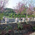 大崗山生態園區-大崗山生態園區照片