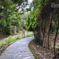清境柳杉步道-清境柳杉步道照片