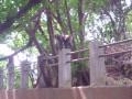 柴山自然公園(壽山)-台灣獼猴照片