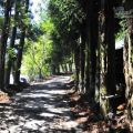 清境落日步道(2號步道)-清境落日步道照片