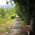 步步高昇步道(4號步道)-步步高昇步道(4號步道)照片