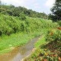 桃米坑溪河濱步道