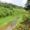 桃米坑溪河濱步道-桃米坑溪河濱步道照片