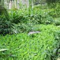 草湳溼地(草湳溼地農場)-草湳濕地(草湳濕地農場)照片