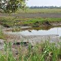 湖口溼地(湖口濕地)-湖口濕地照片