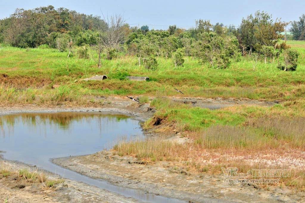 湖口溼地(湖口濕地)主照片