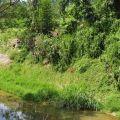 桃米生態村-桃米坑親水公園5照片