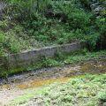 桃米生態村-中路坑濕地2照片