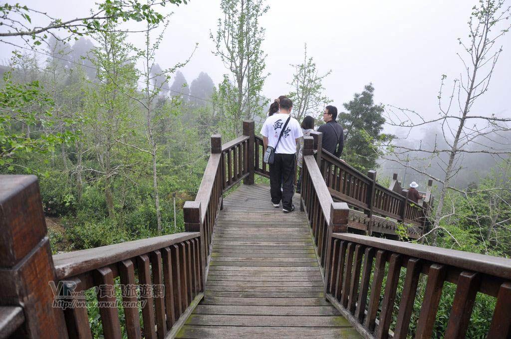 銀杏林景觀步道主照片
