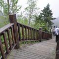 銀杏林景觀步道-銀杏林景觀步道照片