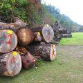 樹木銀行&觸口生態教育園區照片