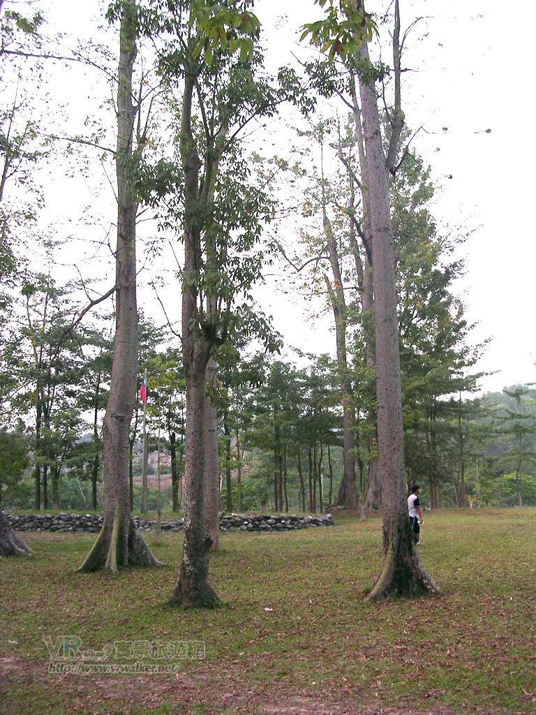 吉貝木棉林(武潭國小平和分校 )主照片