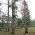 吉貝木棉林(武潭國小平和分校 )-吉貝木棉林(武潭國小平和分校 )照片