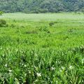 水上草原-水上草原照片
