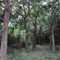 恆春生態休閒農場-恆春生態休閒農場照片