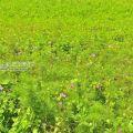 滿州花海-滿州花海照片