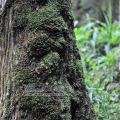 明池國家森林遊樂區-明池國家森林遊樂區照片