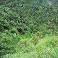 太平山國家森林遊樂區-太平山國家森林遊樂區照片