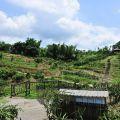 香格里拉休閒農場-香格里拉休閒農場照片