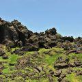 龍坑生態保護區-龍坑生態保護區照片