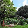 猴洞山-石牌公園-猴洞山-石牌公園照片