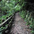 棲蘭國家森林遊樂區-棲蘭國家森林遊樂區照片