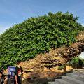墾丁國家公園-飛來石照片