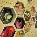 蜂采館-蜂采館照片