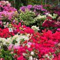 歸仁七甲花卉區-歸仁七甲花卉區照片