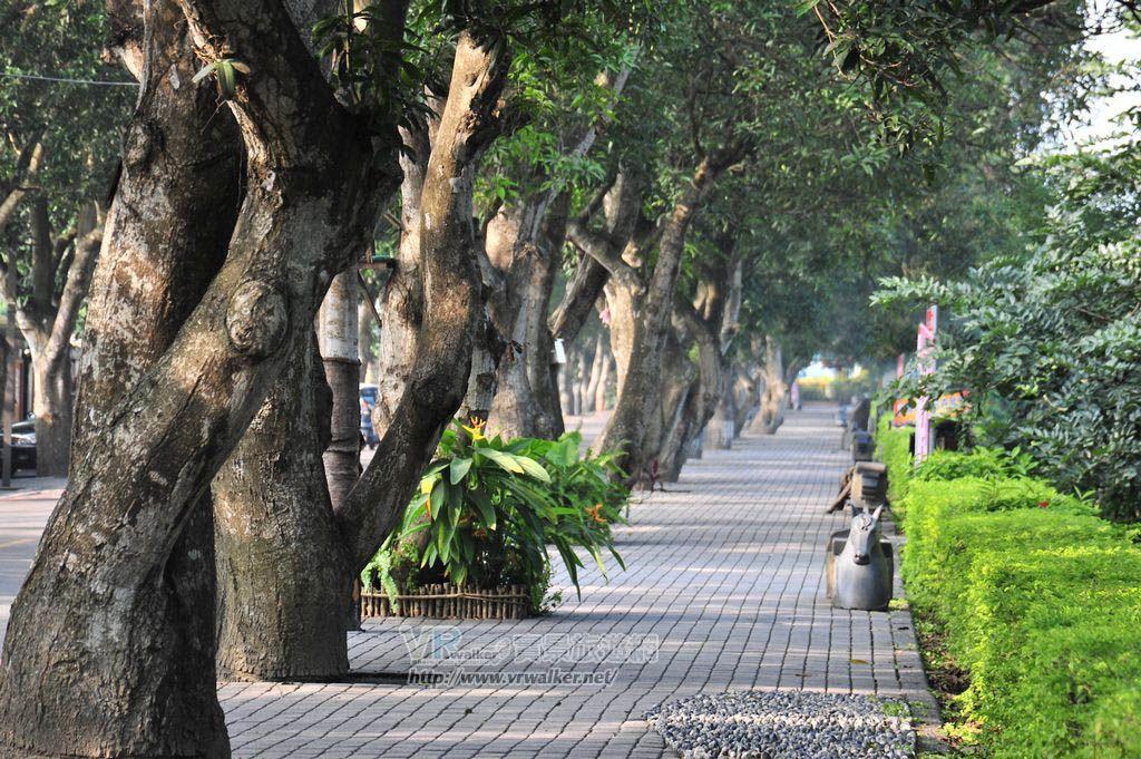 綠色隧道景觀公園主照片