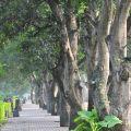 綠色隧道景觀公園-綠色隧道景觀公園照片