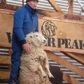 紐西蘭 皇后鎮-華特山頂牧場-紐西蘭 皇后鎮-華特山頂牧場照片