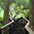 杉林棧道(夢湖小徑)-杉林棧道(夢湖小徑)照片