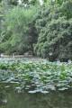 台南公園(舊名中山公園)-台南公園5照片