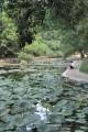 台南公園(舊名中山公園)-台南公園6照片