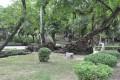 台南公園(舊名中山公園)-台南公園7照片