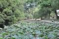 台南公園(舊名中山公園)-台南公園8照片