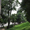 崙頂社區(河堤)公園-崙頂社區(河堤)公園照片