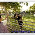 中原世紀自然生態農場-中原世紀自然生態農場照片